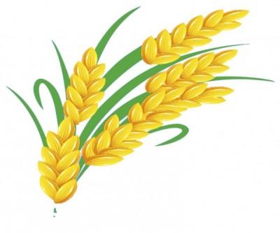 Ячмінь і пшениця (латиська народна казка)