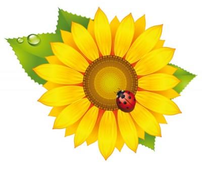 Квітка сонця (В. Сухомлинський)