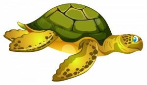 Звідки взялися морські черепахи? (Еліна Заржицька)