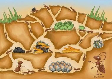 Гостинні мурашки (болгарська казка)