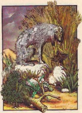 Лисиця і Жайвір (іспанська казка)