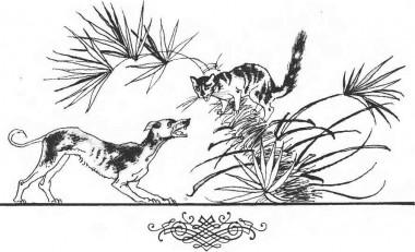 Пес і кіт (африканська казка)