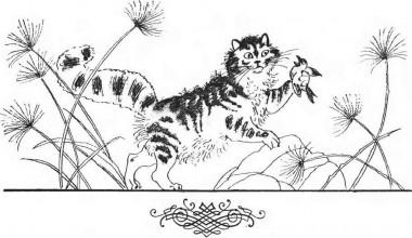 Чому кіт умивається тільки після обіду (африканська казка)
