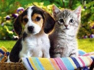 Чому миші, коти й собаки між собою не миряться (чеська казка)