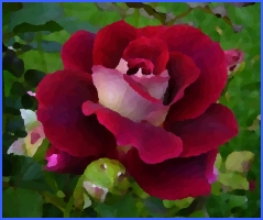 Найпрекрасніша троянда світу (Г. Х. Андерсен)