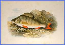 Риба і перстень (англійська казка)