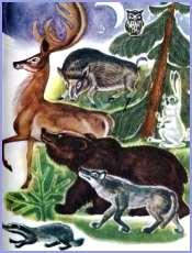 Війна між псом та вовком