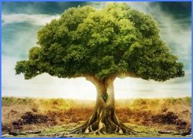Золоте дерево (грецька казка)